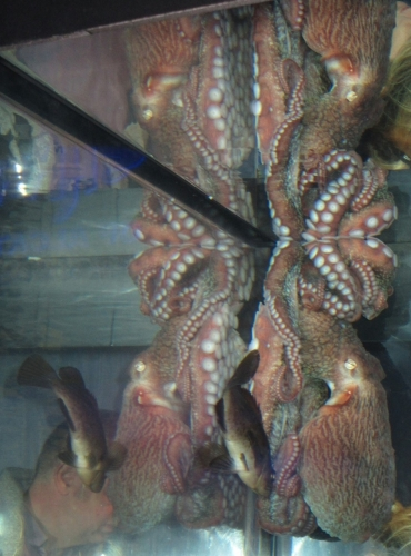 Reflected Octopus