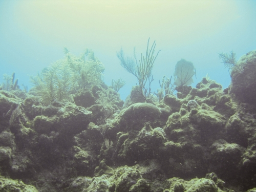 landscape natural light underwater coral reef grand cayman