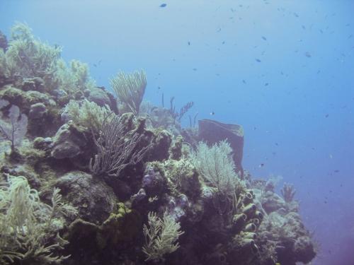 off the wall grand cayman fan coral barrel sponge